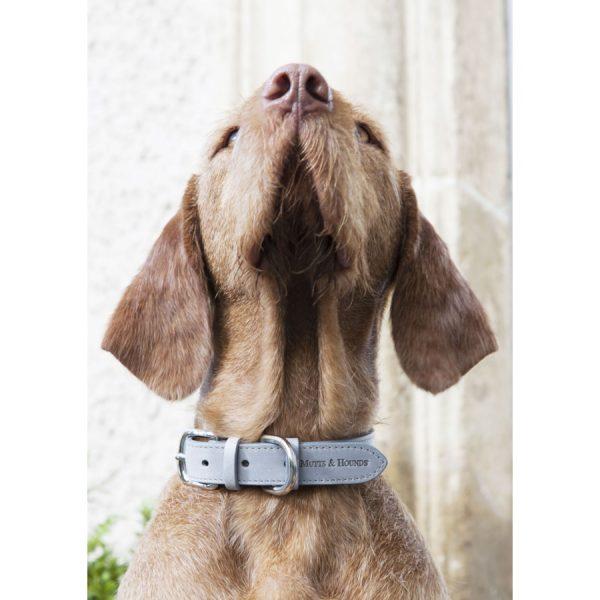 Grijze Leren Honden Halsband_Mutts & Hounds_4