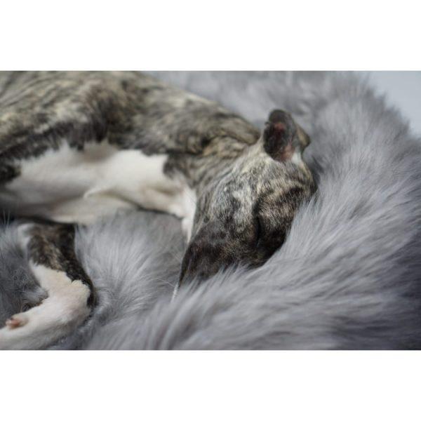 Zilver Hondendeken Fora_Labbvenn_5
