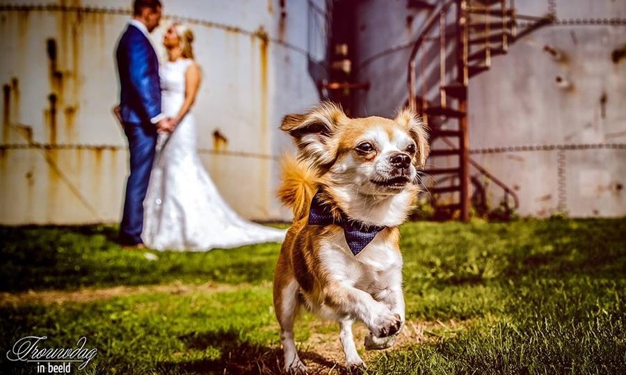 Vier verbluffende huwelijksvoorstellen