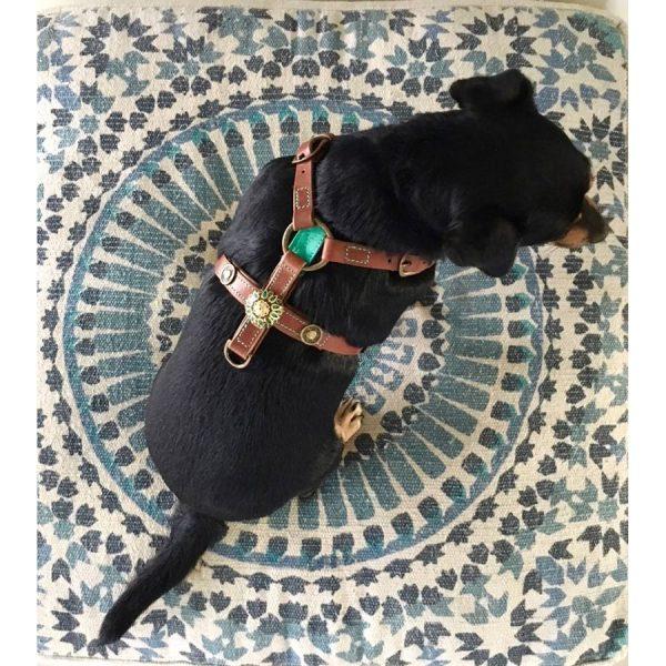 Uniek hondentuig DWAM