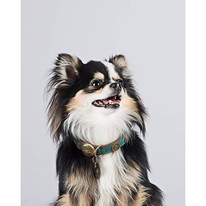 stoere leren hondenhalsband rebel