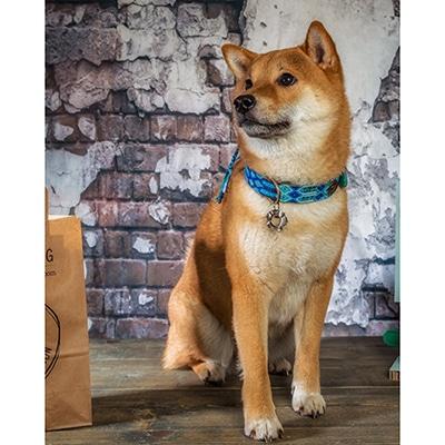 Hondenhalsband Blue leer blauw