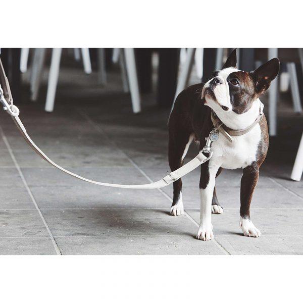 Hondenhalsband como suede beige dogahaves