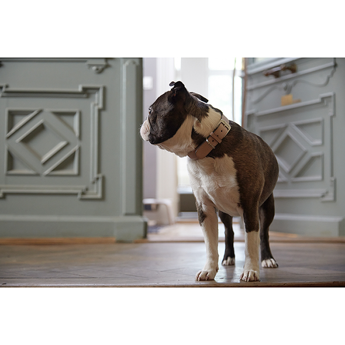 Hondenhalsband poederroze MiaCara