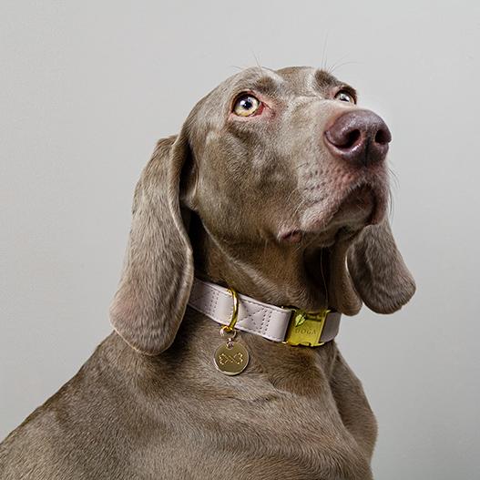 Hondenpenning goud hondenhalsband goud