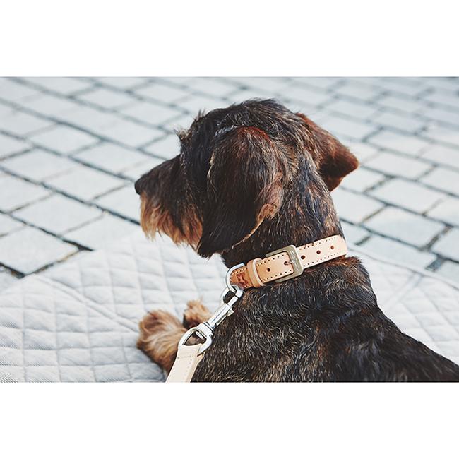 Leren Hondenhalsband Beige