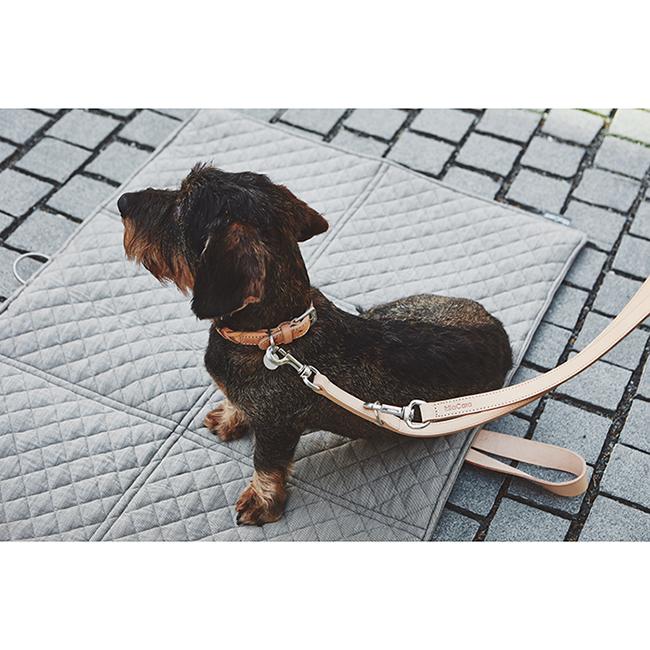 Leren Hondenhalsband teckel
