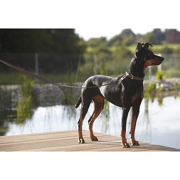 Leren hondenhalsband Basalt MiaCara