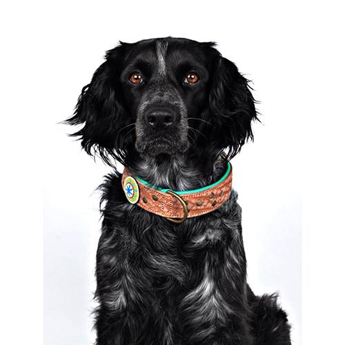 Leren hondenhalsband Phoenix beige