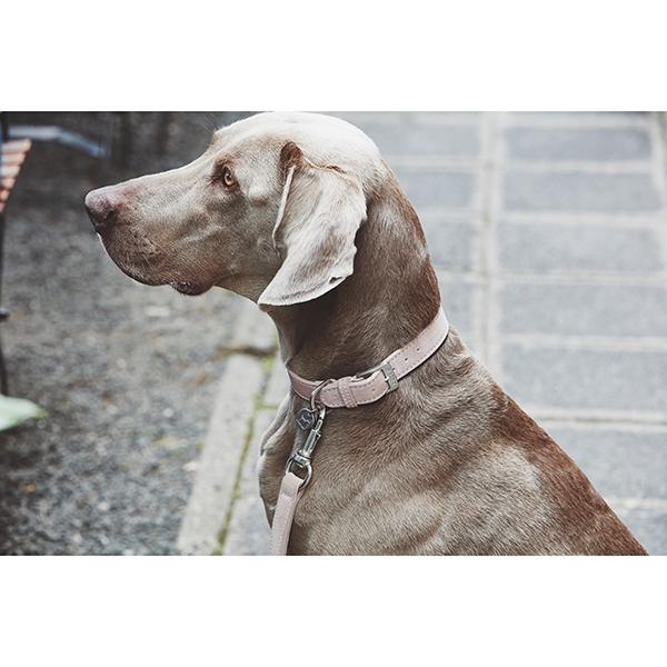 Suède hondenhalsband modern roze