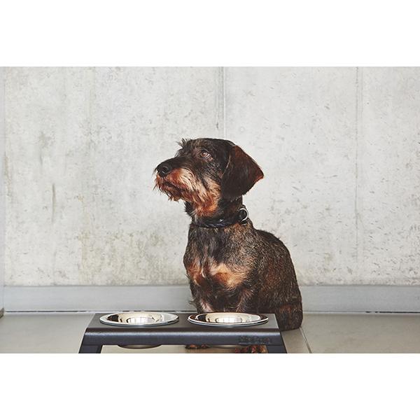 Zwarte Hondenriem Bergamo teckel