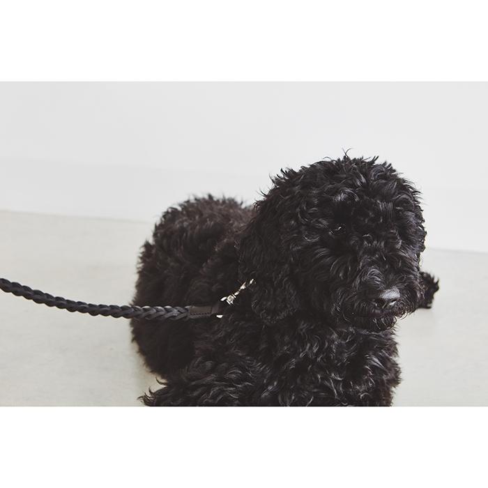 Zwarte Leren hondenriem MiaCara