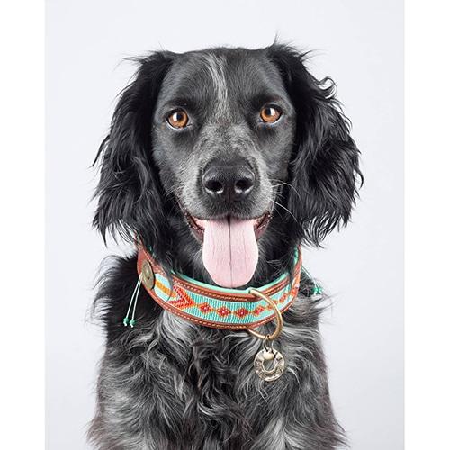 kralen hondenhalsband paddy lee -4cm