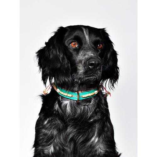 stoere hondenhalsband leer bon bini DWAM