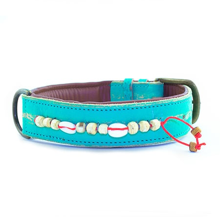 turquoise hondenhalsband dog with a mission