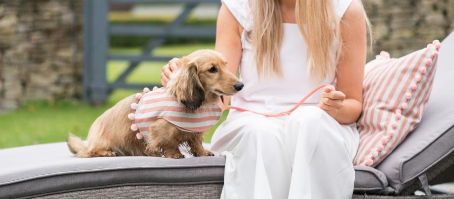Hondenkleding kleine honden hondenjas dogahaves