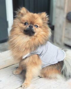 mooie Hondenkleding Hondenjas DOGA Dogahaves