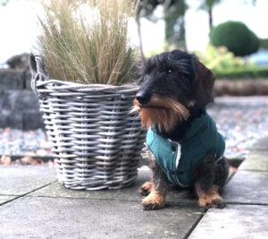 mooie hondenjas Dogahaves DOGA teckel