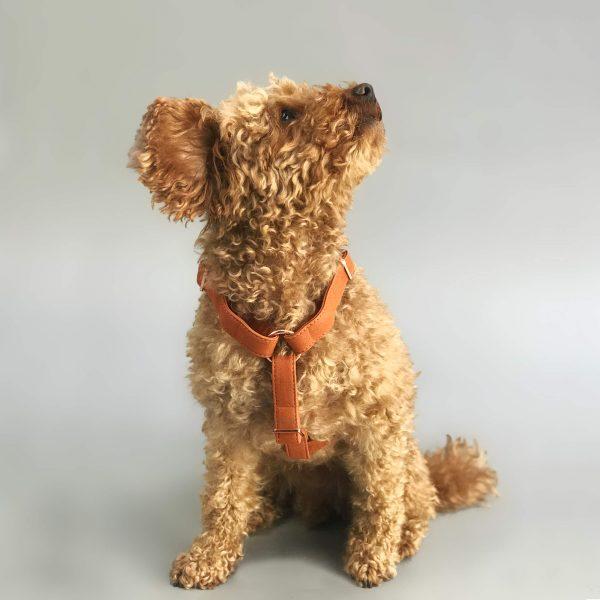 Mooi hondentuig cognac toypoodle