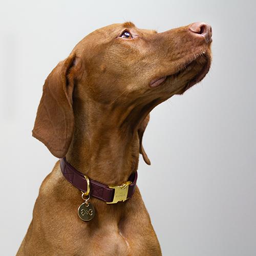 Hondenhalsband goud rood DOGA
