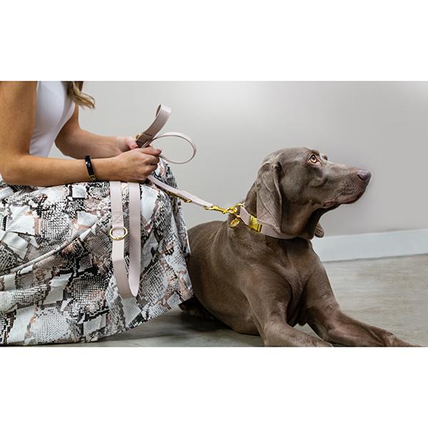 Hondenhalsband taupe met goud