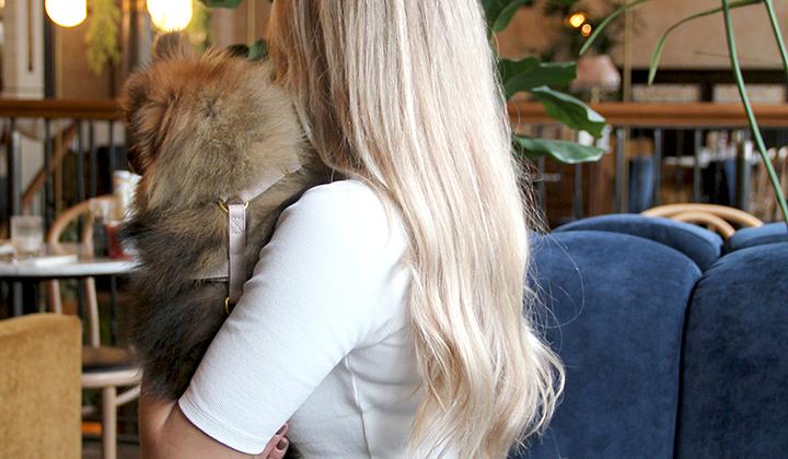 Hondentuig Pomeranian taupe Dogahaves