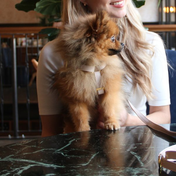 Hondentuigje pomeranian kleine hond