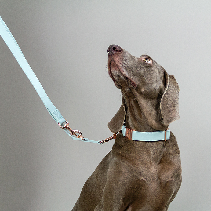 Mooie hondenhalsband DOGA mintgroen