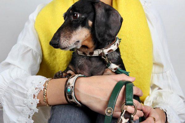 Teckel hondenhalsband en riem DWAM Ivy