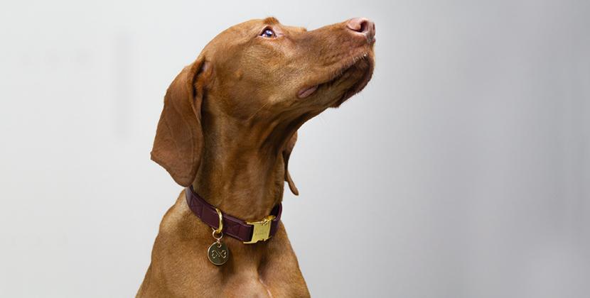 mooie hondenhalsband kopen Dogahaves