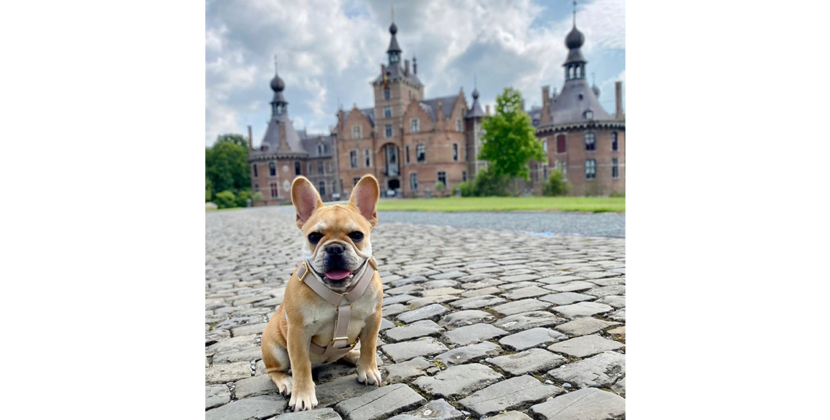 Hondenharnas hondentuigjes Franse Bulldog