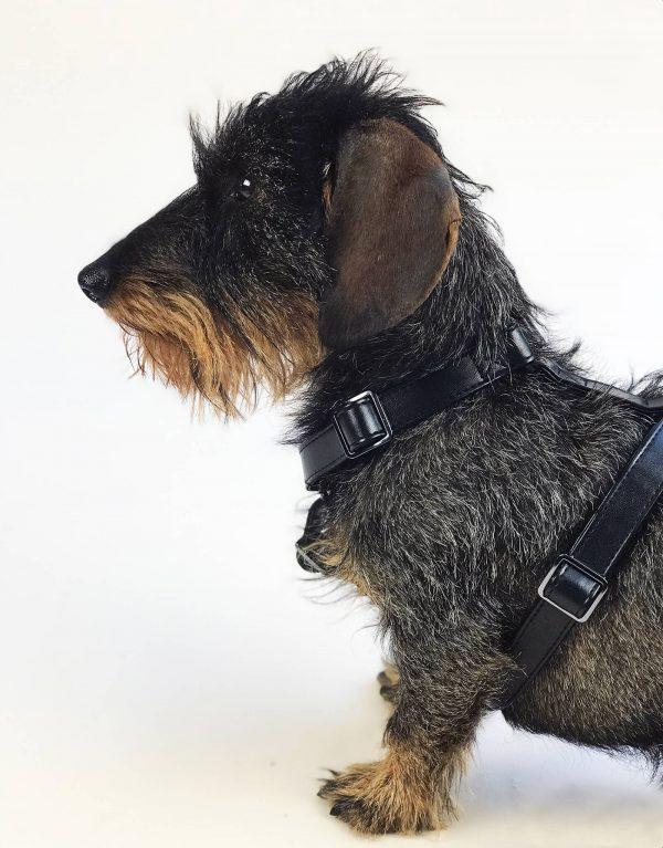 Stoer hondentuig zwart leer 2