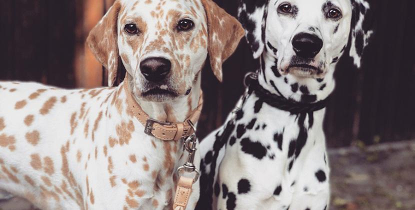Hondenhalsband en lijn kopen