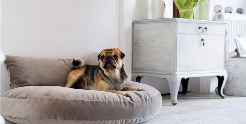Luxe Hondenkussen grijs luna oxford mopshond