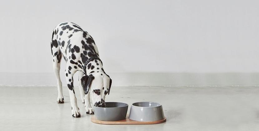 Luxe voerbakken voor je hond