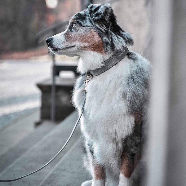 Leren hondenhalsband Shepherd grijs met goud
