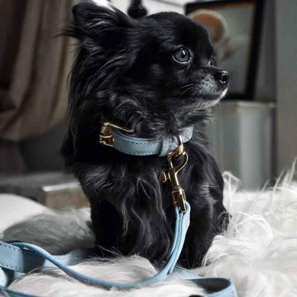 Leren hondenhalsband en hondenriem Sky blauw Dogahaves