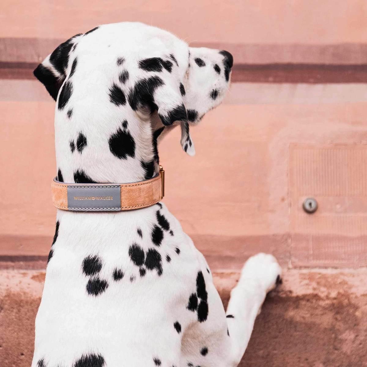 Mooie-leren-hondenhalsband-Dalmatier